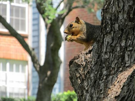 Squirrel on the tree - Free Stock Photo