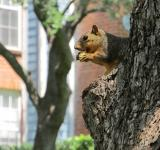 Free Photo - Squirrel on the tree
