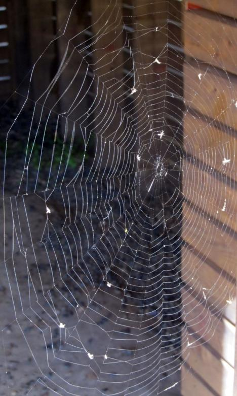 Free Stock Photo of Spider Web Created by Pixabay