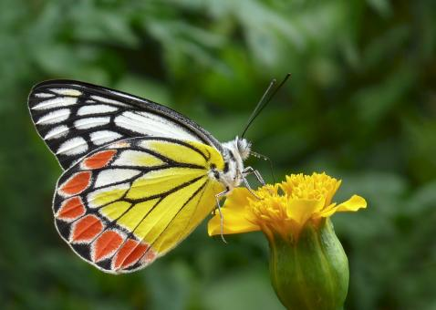 Butterfly on the Flower - Free Stock Photo