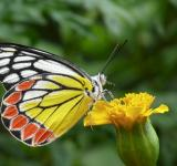 Free Photo - Butterfly on the Flower