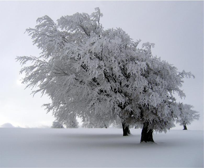 Frozen - Free Winter Stock Photos