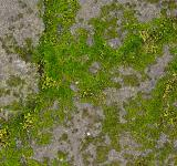 Free Photo - Mossy Stone - HDR Texture