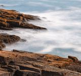 Free Photo - Raging Crocodile Coast