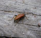 Free Photo - Brown Beetle