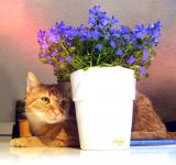 Free Photo - Cat with the Pot
