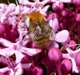 Free Photo - Bee in the Garden