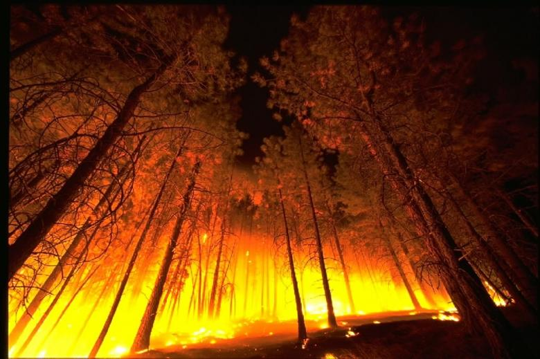 Wildfire - Free Forest Stock Photos