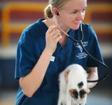 Free Photo - Veterinarian