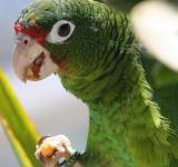Free Photo - Green Parrot