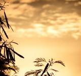 Free Photo - Tropical Trees Silhouette at Sunset