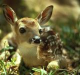Free Photo - Fawn in the Jungle