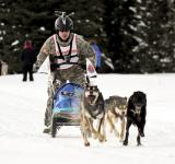 Free Photo - Dog Sled Team