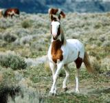 Free Photo - Feral Horse