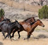 Free Photo - Feral Horses