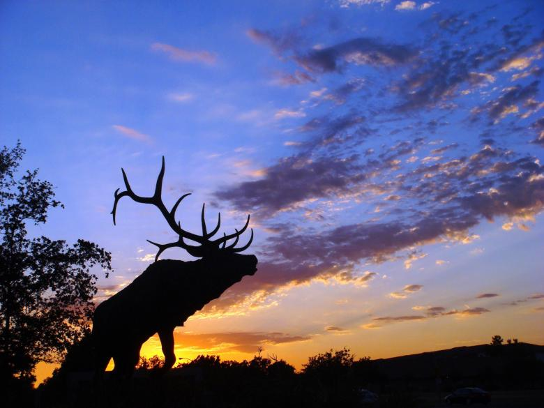 Free Stock Photo of Elk Silhouette Created by Pixabay