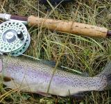 Free Photo - Rainbow Trout