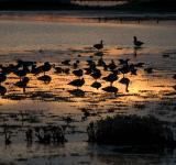 Free Photo - Birds at Sunset