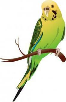 Green Parakeet Vector Image - Free Stock Photo