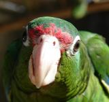 Free Photo - Parrot Upclose