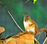 Free Photo - Wild Squirrel