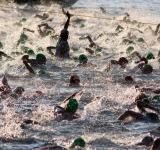 Free Photo - Triathlon Swim