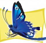 Free Photo - Vector Butterfly