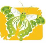 Free Photo - Green Butterfly Illustration
