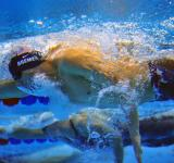 Free Photo - Swimming Competition