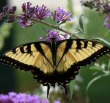 Free Photo - Butterfly in the Garden
