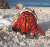 Free Photo - Crab on the Beach