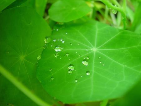 Raindrops on the Leave - Free Stock Photo