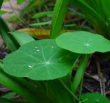 Free Photo - Raindrops on the Leave