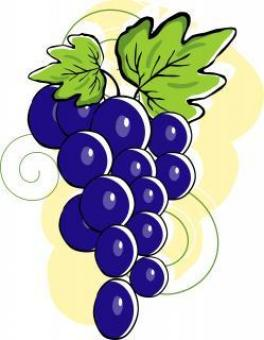 Grapes with leafs	- Vector Illustration - Free Stock Photo