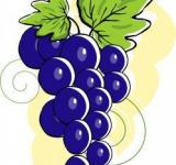 Free Photo - Grapes with leafs	- Vector Illustration