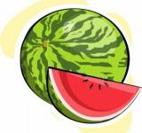Free Photo - Watermelon Vector Illustration