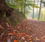 Free Photo - Misty Autumn Trail - HDR