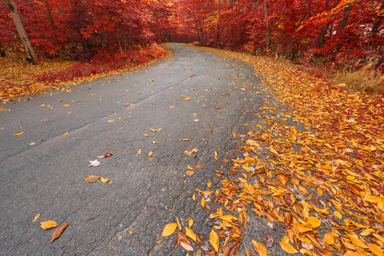 Free Stock Photo of Winding Autumn Forest Road - Ruby Gold HDR Created by Nicolas Raymond