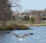 Free Photo - Birds Flying on the Lake