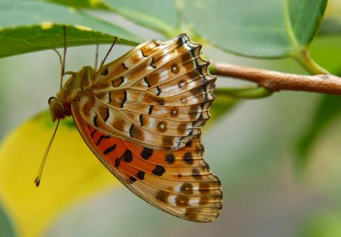 Butterfly in the Garden - Free Stock Photo
