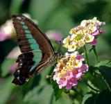 Free Photo - Butterfly on the Flowers