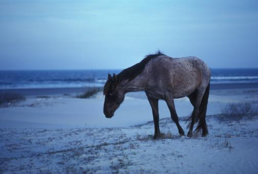 Horse on the Shore - Free Stock Photo
