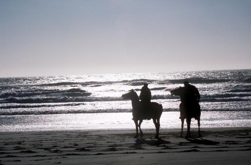 Horse Riding on the Shore - Free Stock Photo