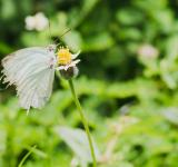 Free Photo - Butterfly on flower