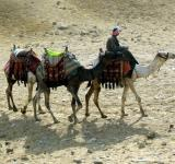 Free Photo - Camel Herder