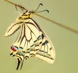 Free Photo - Beautiful Pattern on Butterfly