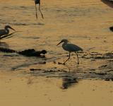 Free Photo - White Birds on the Rivershore