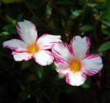 Free Photo - Flowers in the Garden