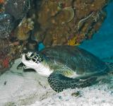 Free Photo - Turtle in the Sea