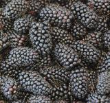 Free Photo - Black Berries